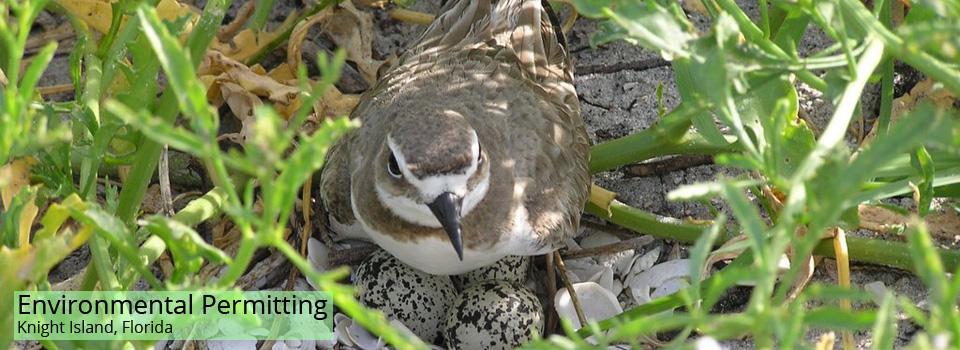 Nesting-Shore-Birds-2